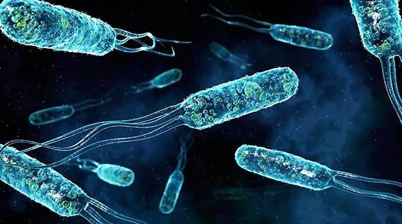 Что это такое анаэробные бактерии и анаэробные инфекции. что такое анаэробы и их классификация бактерии бывают анаэробные и аэробные