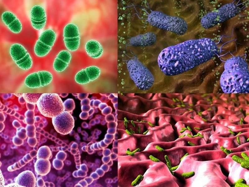 Что это такое анаэробные бактерии и анаэробные инфекции