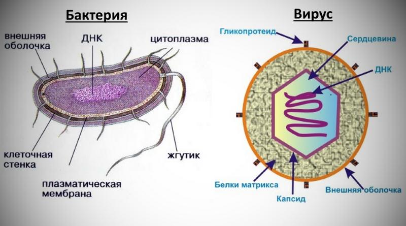 Аэробные и анаэробные бактерии. почему не следует лить кефир в септик?