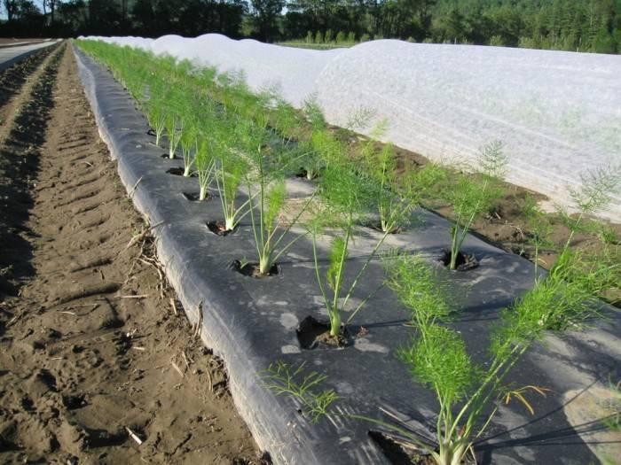 Геотекстиль для садовых дорожек: 5 советов по выбору и укладке | строительный блог вити петрова