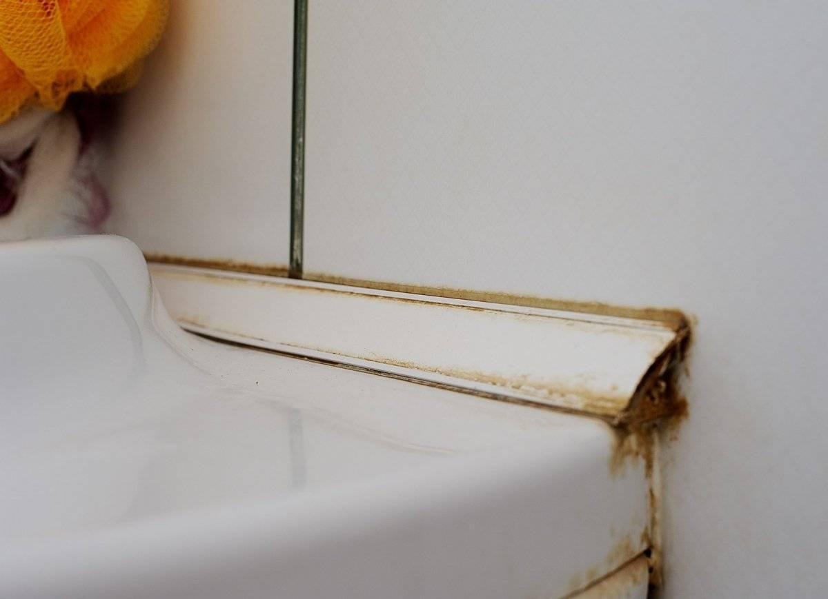 Плесень в ванной (грибок): как избавиться (убрать)? швы, плитка — средства