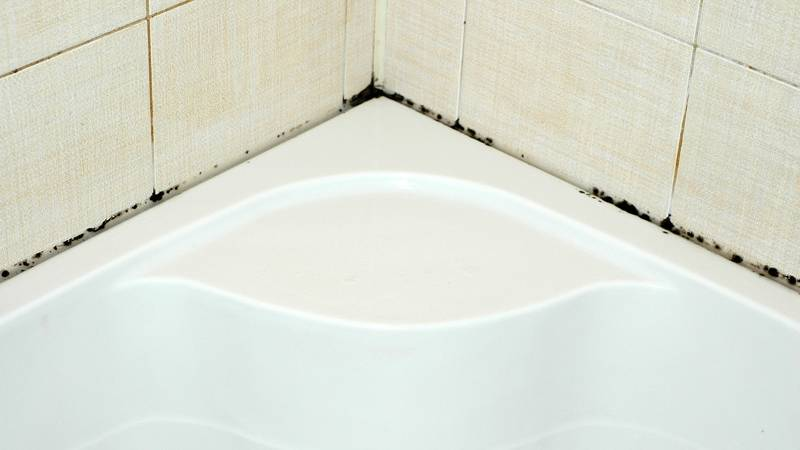 Грибок в ванной комнате: как избавиться?