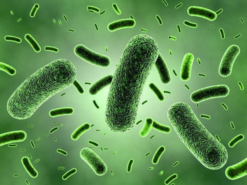 Какие бактерии лучше для септика