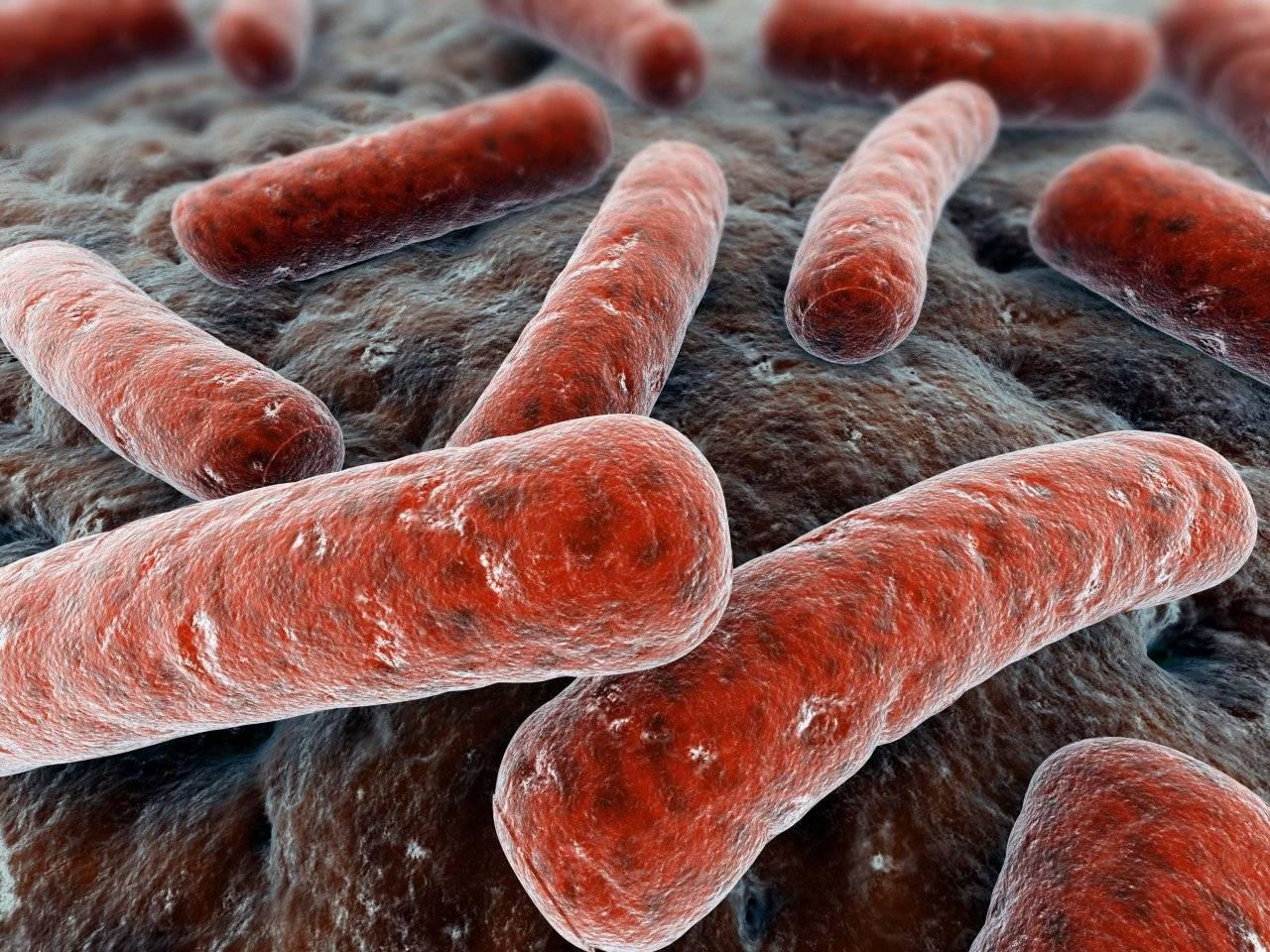 Бактерии для септиков: обзор, виды, как работают, анаэробные и аэробные типы - точка j