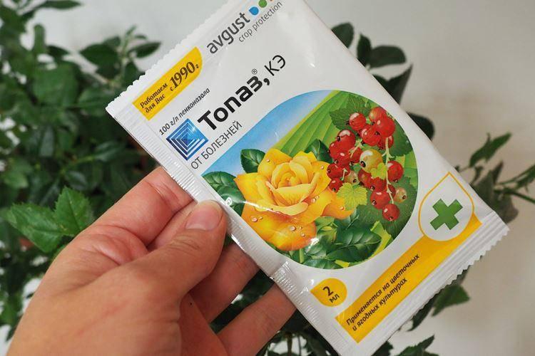 Как применять препарат топаз для растений: инструкция, дозировки