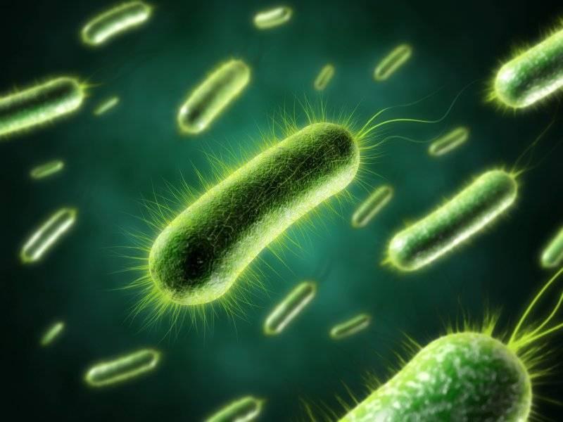 Что такое анаэробные бактерии? Как правильно применять- Виды +Фото и Видео