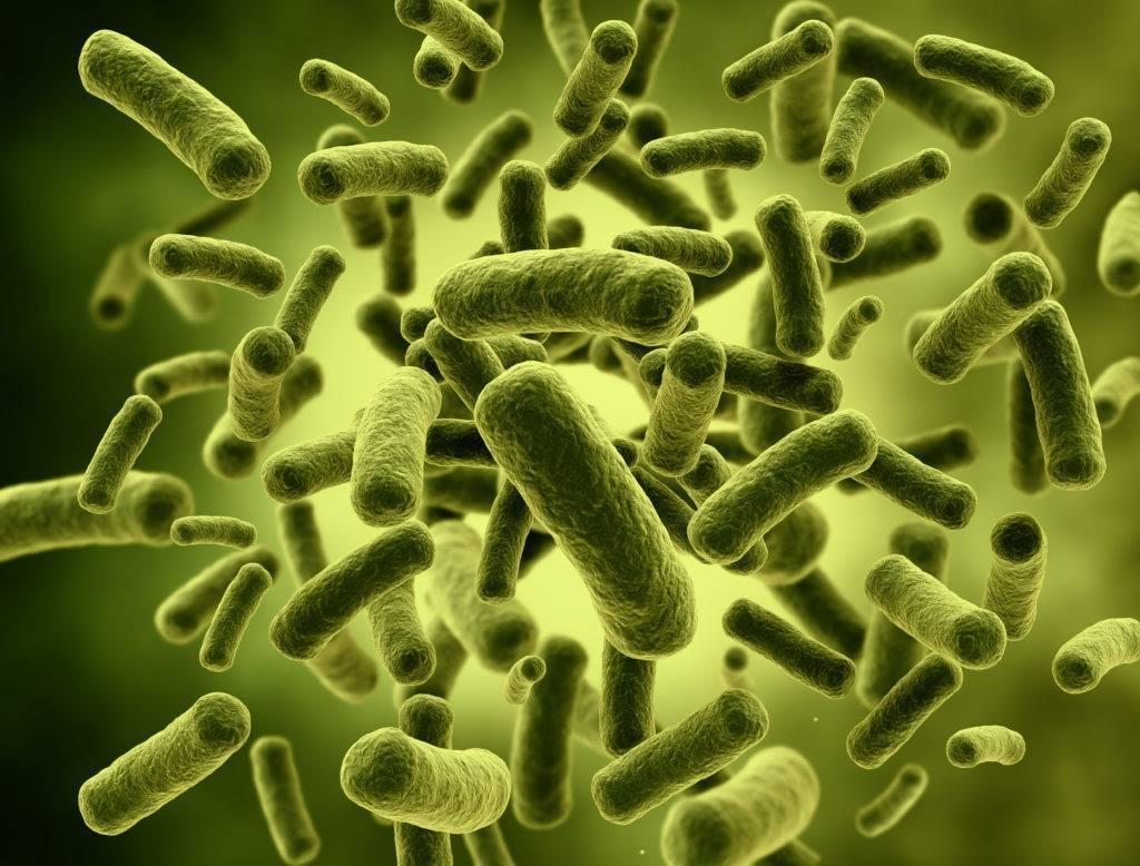 Кто такие анаэробные бактерии