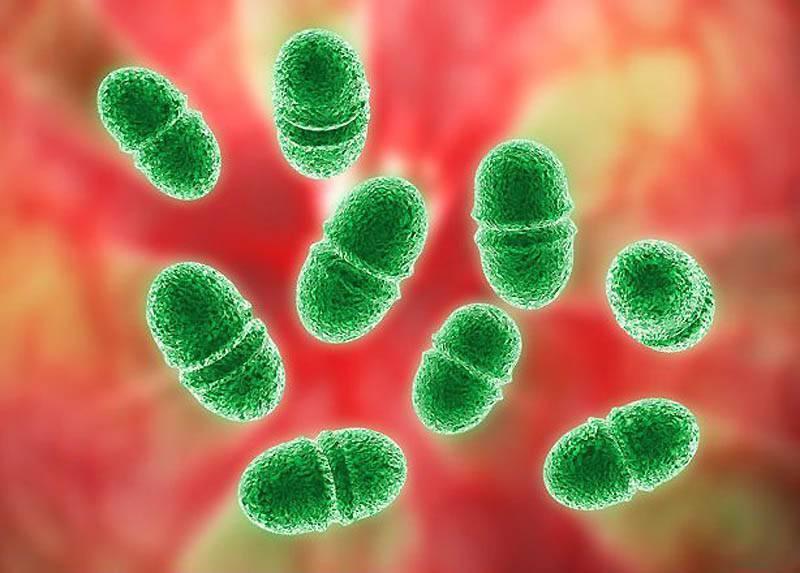 Бактерии для запуска аквариума: виды, фото, видео