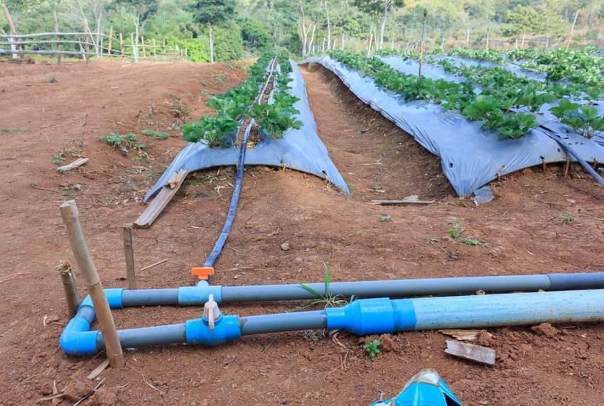 Поливалка для огорода своими руками, готовые системы полива