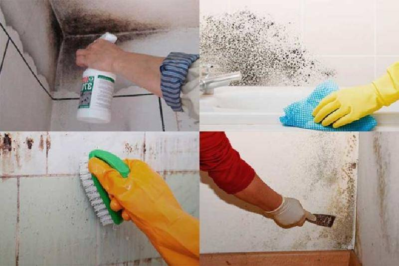 Как избавиться навсегда от грибка и плесени в ванной