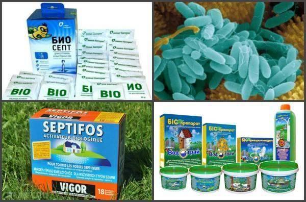 Бактерии для переработки стоков в септике