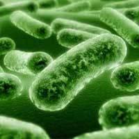Как питаются и дышат бактерии? зачем бактериям ферменты и пигменты?