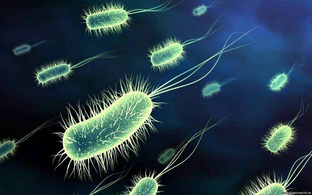 Бактерии аэробные pvsservice.ru