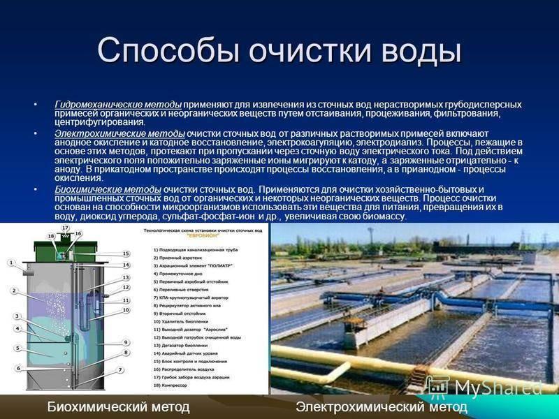 Биологическая очистка сточных вод: гидробиология, биологические методы